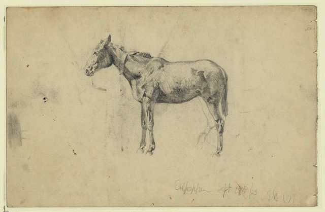 An army mule. September 28, 1863