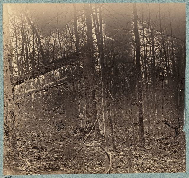 Views in the woods between Palmers and Spotswoods Houses at point where Federals carried Confederate entrenchments
