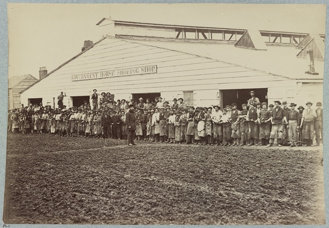 Horse shoeing shop, Quartermaster's department, Washington, D.C., April, 1865