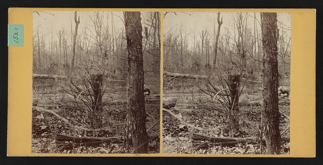 Spot where Gen. Wadsworth, USA, fell. Shattered tree struck by same shell that killed his horse