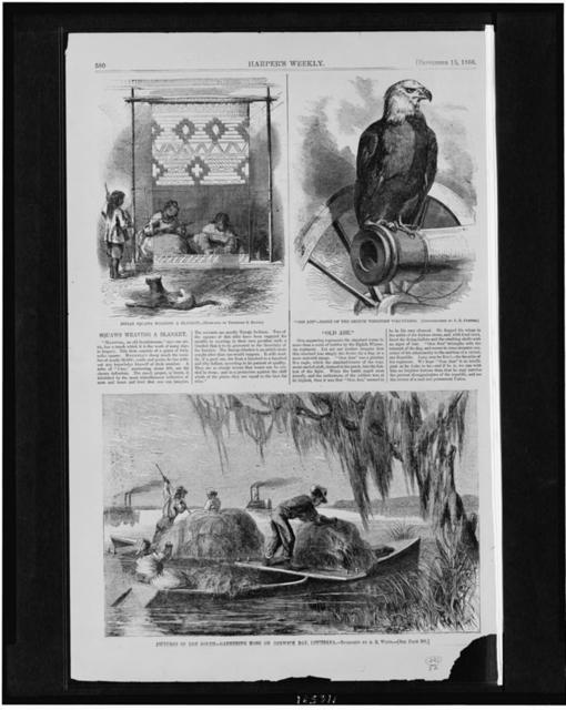 """Indian squaws weaving a blanket / sketched by Theodore R. Davis.  """"Old Abe"""" - eagle of the Eighth Wisconsin volunteers / photographed by F.R. Curtiss.  Pictures of the South - gathering moss on Berwick Bay, Louisiana / sketched by A.R. Waud."""