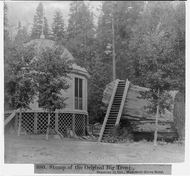 Stump of the original Big Tree - Diameter 32 ft. - Mammoth Grove Hotel
