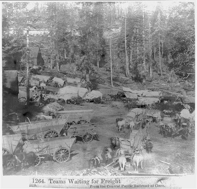 Teams waiting for freight, from the Central Pacific Railroad
