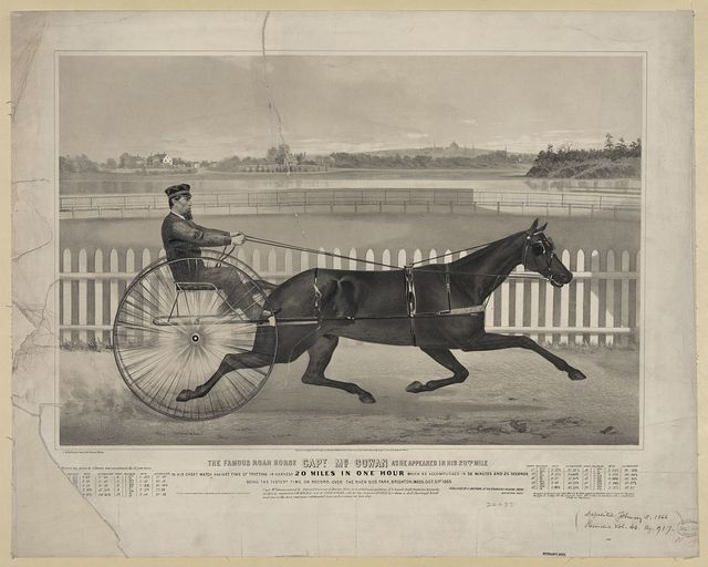 The famous roan horse Capt. McGowan as he appeared in his 20th mile