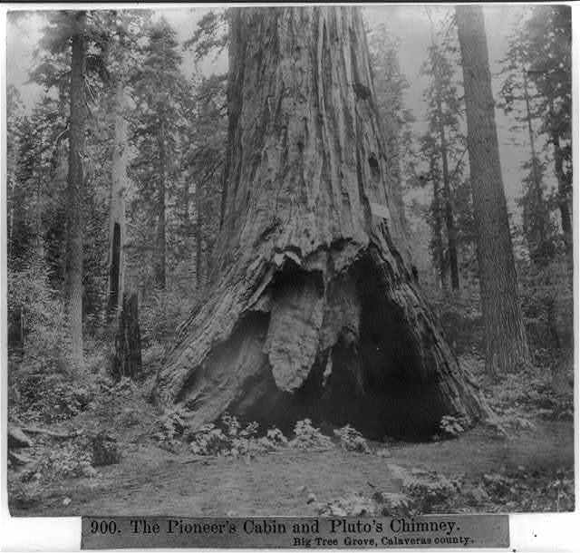 The Pioneer's Cabin and Pluto's Chimney - Big Tree Grove, Calaveras County