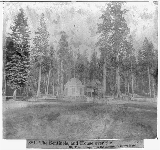 The Sentinels, and House over the Big Tree Stump, from the Mammoth Grove Hotel