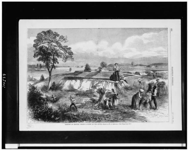 Harvest on historic fields--a scene at the South / drawn by W.L. Sheppard.