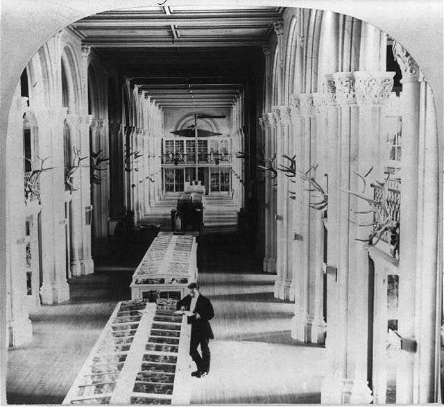 [Interior of the Smithsonian Institution, Washington, D.C., showing exhibit cases]
