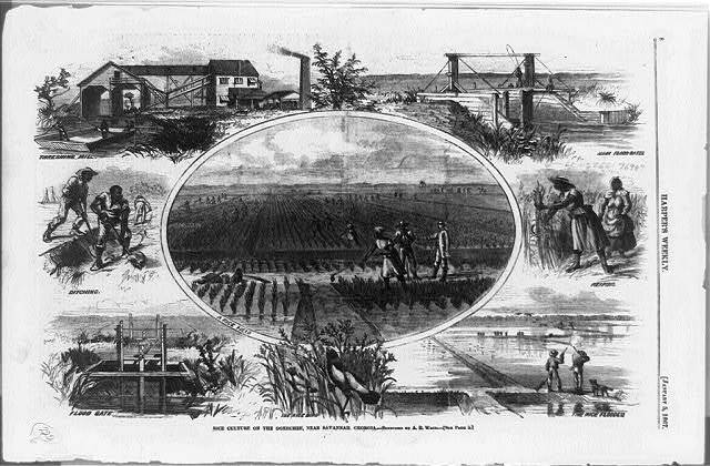 Rice culture on the Ogeechee, near Savannah, Georgia / sketched by A.R. Waud.