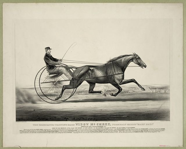 "The celebrated trotting mare Widow McChree, formerly called ""Mary Hoyt"": Owned by Capt. Isaiah Rynders, N.Y. sired by Old American Star, he by Sir Henry, by Sir Archy, by imp Diomed, her dam by Duroc, by Old Duroc, by imp Diomed"