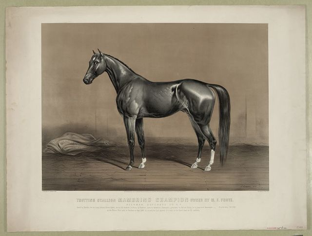 Trotting stallion Mambrino Champion owned by M.F. Foote