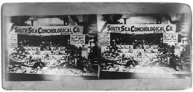 South Sea Conchological Co