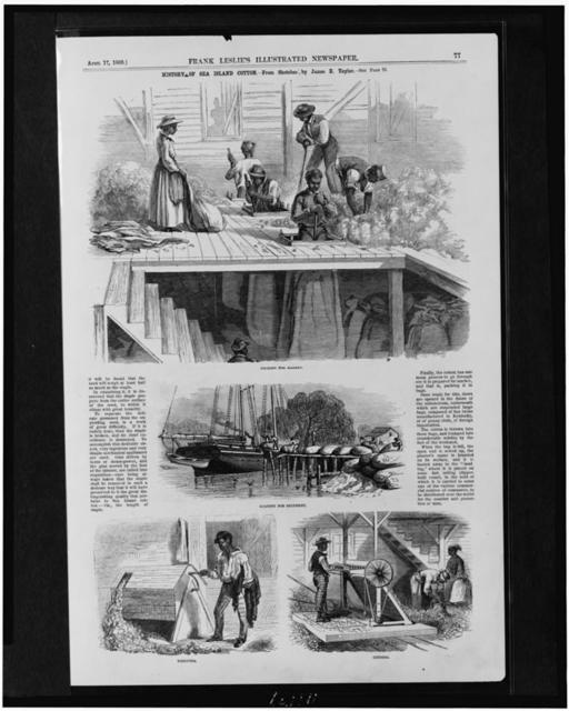 History of Sea Island cotton / from sketches by James E. Taylor.