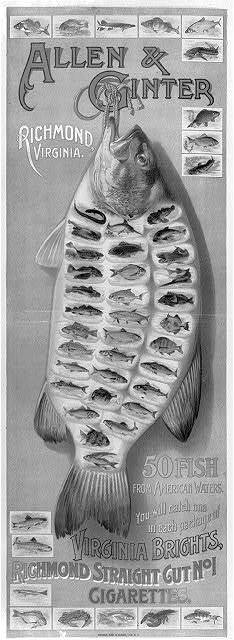Allen & Ginter, Richmond, Virginia. 50 fish from American waters. You will catch one in each package of Virginia Bright, ... cigarettes / Lindner, Eddy & Clauss, lith., N.Y.