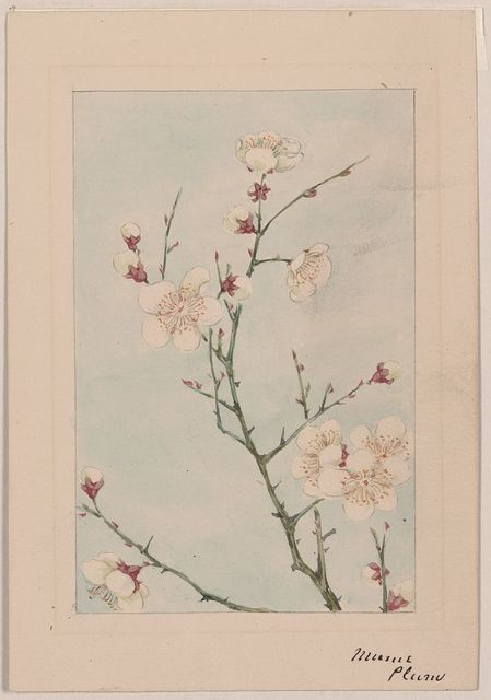 [Plum branches with blossoms]