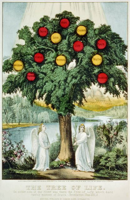 The tree of life: on either side of the river was there the tree of life which bare twelve manner of fruits.--Revelation chap. XXII,2
