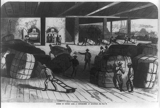 Scenes in cotton land: A cotton-shed at Savannah [Negro labors]