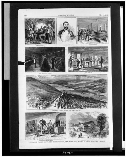 Pleasant Valley Vineyards--Hammondsport, New York / from sketches by Theo. R. Davis.