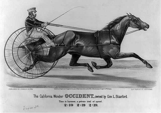 California wonder occident, owned by Gov. L. Stanford