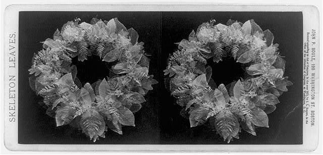Skeleton leaves / John P. Soule, Boston.