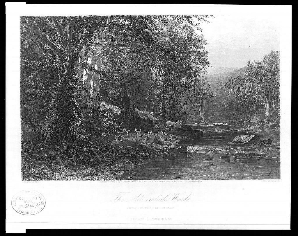 The Adirondack Woods / J.M. Hart N.A. ; R. Hinshelwood.