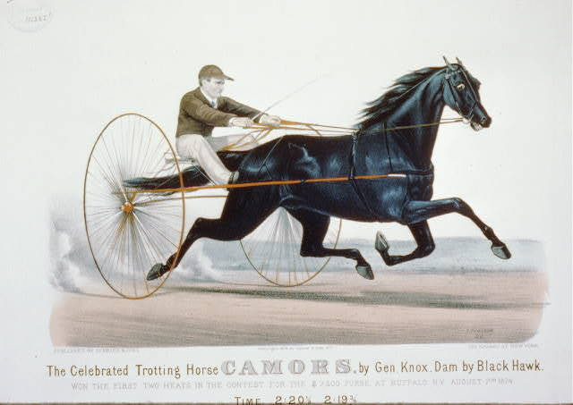 The celebrated trotting horse Camors, by the Gen. Knox, dam by Black Hawk: Won the first two heats in the contest for the $7,500 purse, at Buffalo, N.Y. August 7, 1874