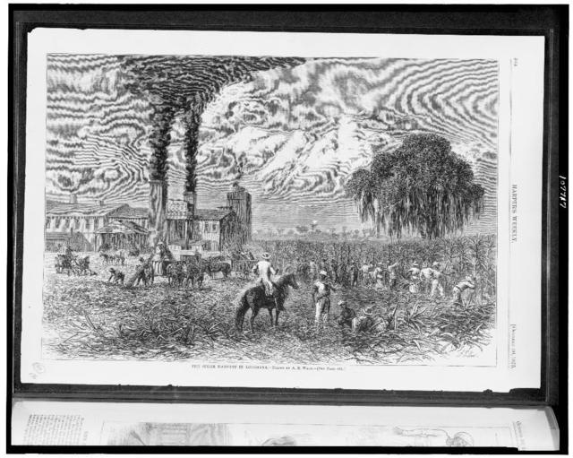 The Sugar harvest in Louisiana / Drawn by A.R. Waud.