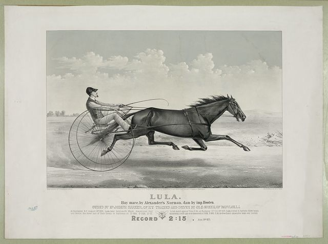 Lula: Bay Mare, by Alexander's Norman, dam by imp. Hooten