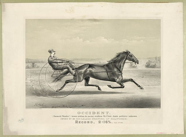 "Occident: (formerly ""Wonder,"") brown gelding, by pacing stallion St. Clair, dam's pedigree unknown"