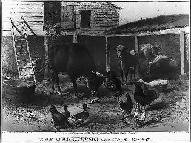 The champions of the barn
