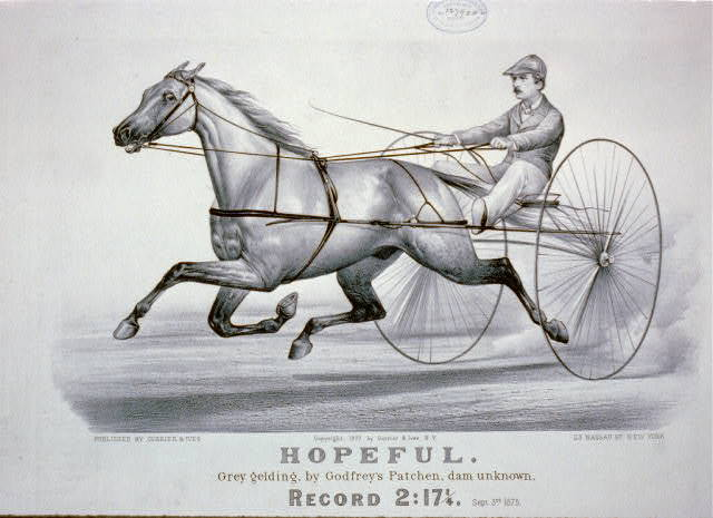 Hopeful: grey gelding, by Godfrey's Patchen, Dam Unknown