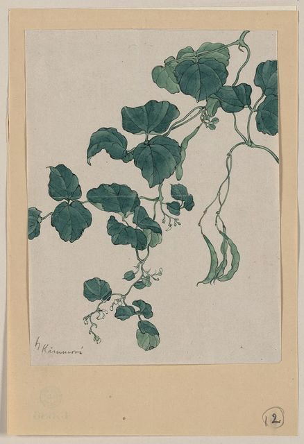 [Mame - green bean or pea plant showing vine, leaves, pods, and blossoms] / Kanemori.