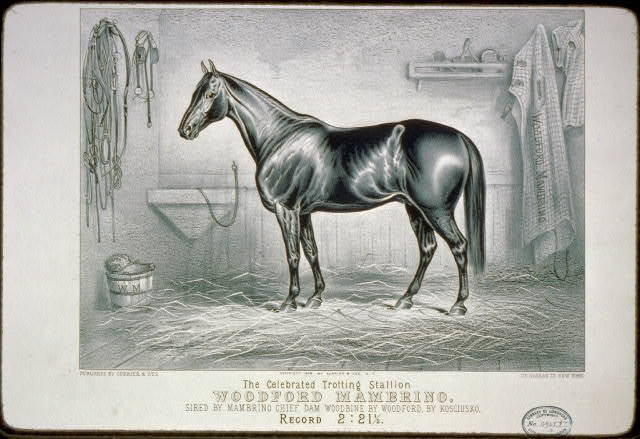 The celebrated trotting Stallion Woodford Mambrino: Sired by Mambrino Chief, dam Woodbine by Woodford, by Kosciusko