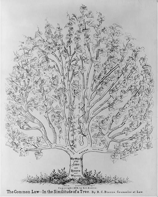 The common law in the similitude of a tree - by R.C. Bierce, counselor at law / J. Miller del. ; lith. by Ezra A. Cook & Co., Chicago, Ill.