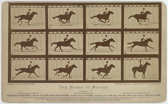 "The Horse in motion. ""Sallie Gardner,"" owned by Leland Stanford; running at a 1:40 gait over the Palo Alto track, 19th June 1878 / Muybridge."