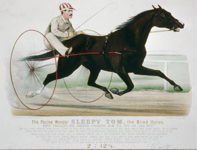 "The pacing wonder Sleepy Tom, the Blind Horse: with Phillips, his driver coaxing him to ""go in and win"" sired by Tom Rolfe, son of Old Pocohantus"
