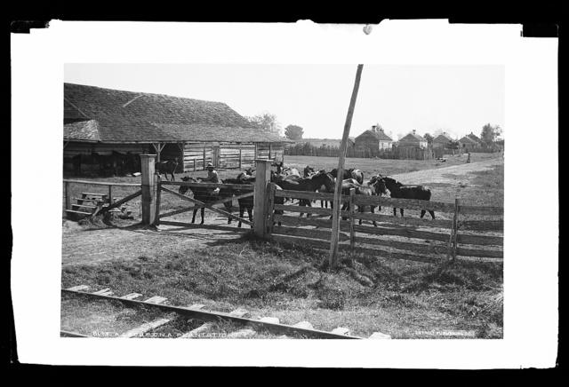 A group on a plantation