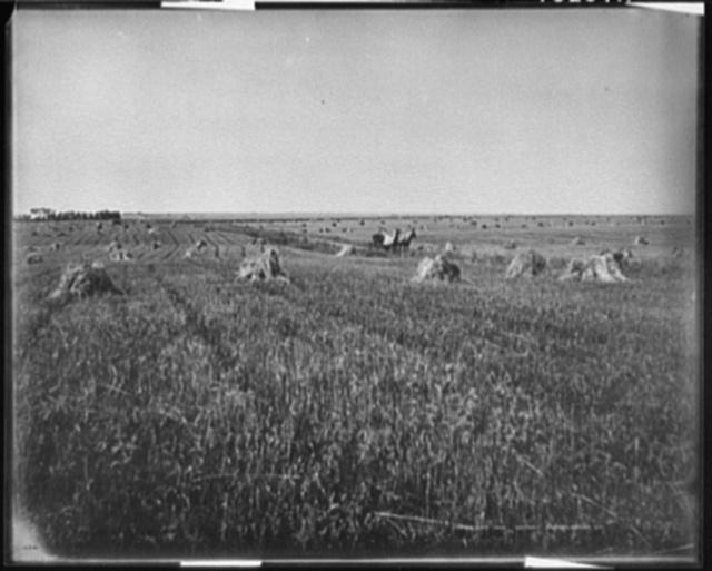 [A Harvest field, Brookings, S.D.]