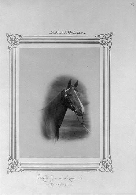 [A mare named Gazal born in the Imperial Stud Farm] / Constantinople, Abdullah Frères.