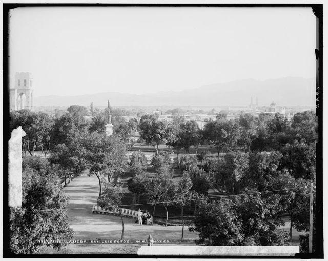 Alameda, San Luis Potosi, The