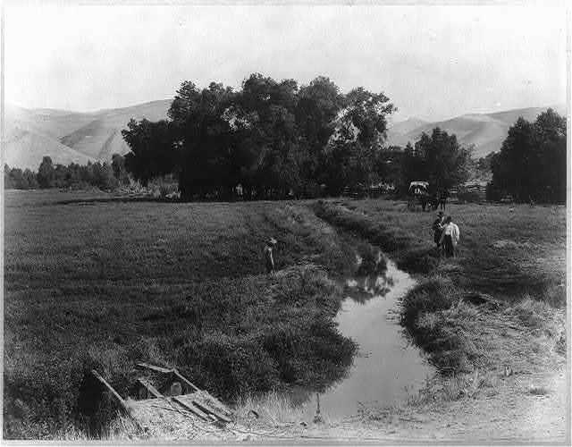 Alfalfa field & irrigation ditch, Rio Bravo Ranch