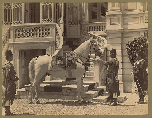 [Asil, Sultan Abdülhamid's horse, with three men in front of a stairway]