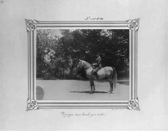 [Cenk: The gray Arabian horse] / Constantinople, Abdullah Frères.