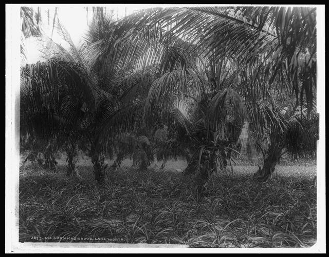 Cocoanuts and pineapples, Lake Worth, Fla.