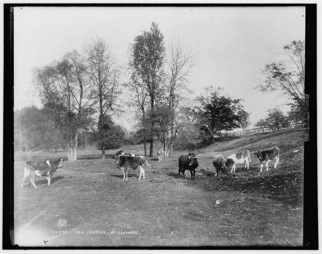 Cow pasture, Mt. Clemens