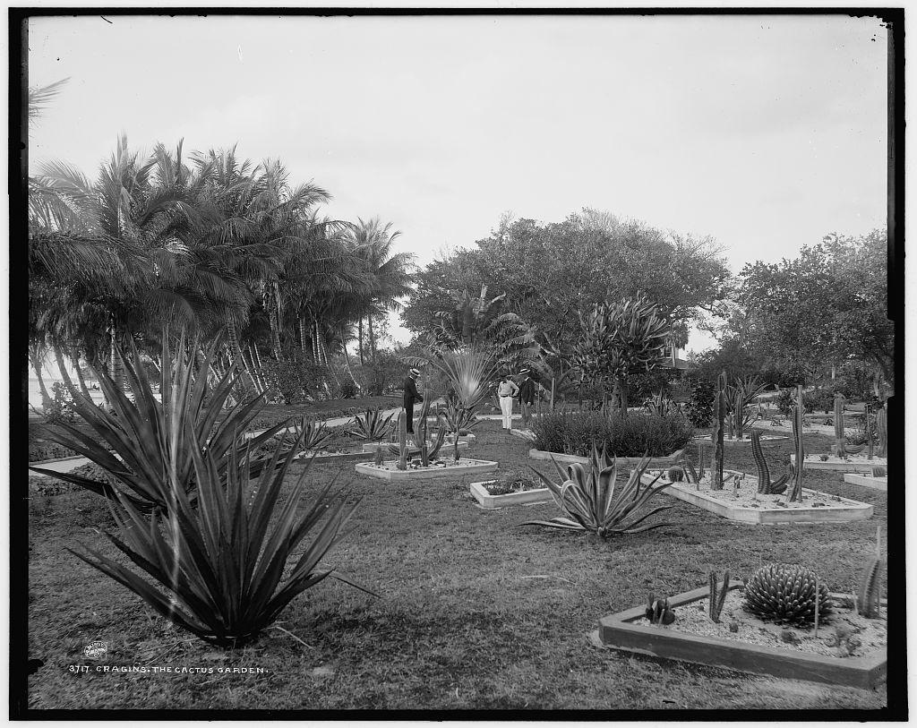 Cragin's, the cactus garden