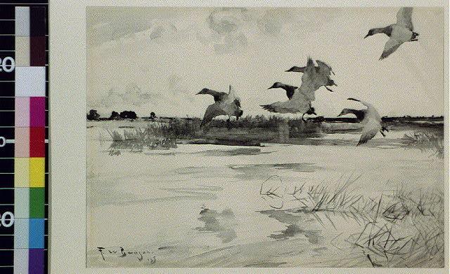 [Five geese landing]