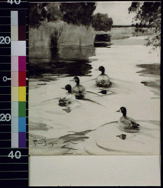 [Four ducks in pond]