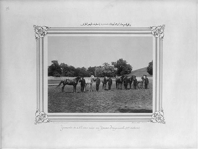 [Four, five and six year old mares of the first section of the Imperial Stud Farm] / Constantinople, Abdullah Frères.