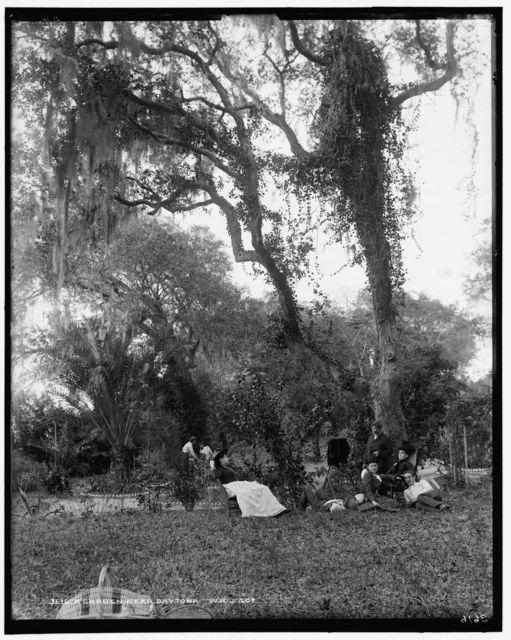 Garden near Daytona, A